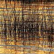 Abstract Reed And Water Patterns Art Print