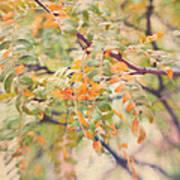Acacia In Warm Colors Art Print