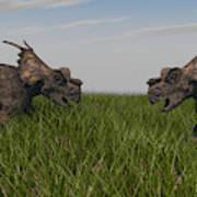 Achelousauruses Confrontation In Swamp Art Print