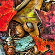 Acorns And Leaves Art Print