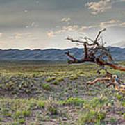Across A Great Wilderness Art Print