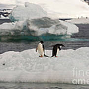 Adelie Penguins On Ice Art Print