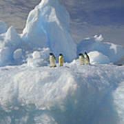 Adelie Penguins On Iceberg Antarctica Art Print