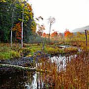 Adirondack Pond Iv Art Print