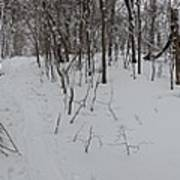 Adirondack Woods 3 Art Print