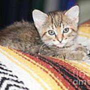 Adorable Kitten Art Print