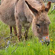 Adorable Mini-burro Art Print