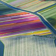 Aerial View Of Flower Fields In Spring Art Print