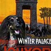 Afghan Hound Art - Luxor Poster Art Print
