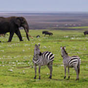 Africa Tanzania African Elephant Art Print