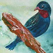 #african Bluebird Art Print