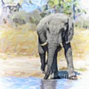 African Elephant At Waterhole Art Print