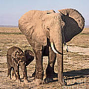 African Elephant Mother And Calf Art Print