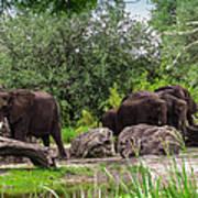 African Elephants  Art Print