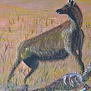African Hyena Art Print