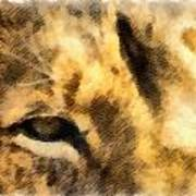 African Lion Eyes Art Print