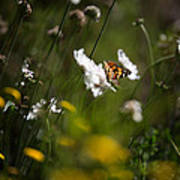 African Monarch Butterfly In Garden Art Print