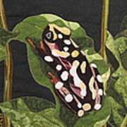 African Reed Frog Art Print by Lynda K Boardman