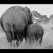 African Safari Elephants 3 Art Print