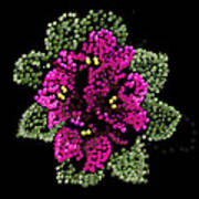 African Violets Bedazzled Art Print