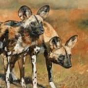 African Wild Dogs Art Print