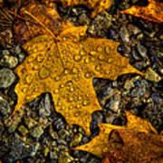 After An Autumn Rain Art Print