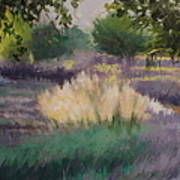 Afternoon  Grasses Art Print