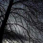 Against A Winter Sky Art Print
