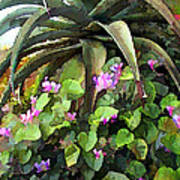 Agave And African Violets Art Print