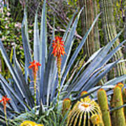 Agave And Cactus Art Print
