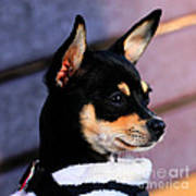 Agie - Chihuahua Pitbull Art Print