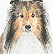 Agility Dog Sheltie In Pastel Art Print