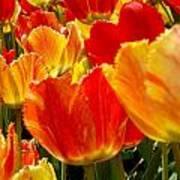 Agressive Tulips Art Print