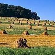 Agriculture - Contour Strips Art Print