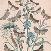 Agrotidae - Hadenidae Art Print