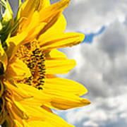 Ah Sunflower Art Print