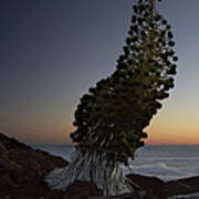 Ahinahina - Silversword - Argyroxiphium Sandwicense - Summit Haleakala Maui Hawaii Art Print