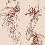 Air Plants In Sepia Art Print