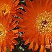 Orange Burst Akuli Kuli Art Print