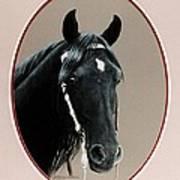 Al Zirr Portrait Art Print