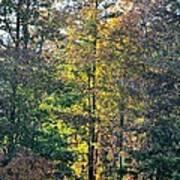 Alabama Forest In Autumn 2012 Art Print