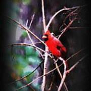 Alabama Rain - Cardinal Art Print