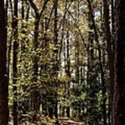 Alabama Woodlands In Spring 2013 Art Print