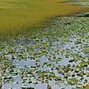 Alaska - Lily Pond And Marshy Meadow Art Print
