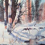 Alaska Birch II Art Print