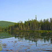 Alaska River Swamp Art Print