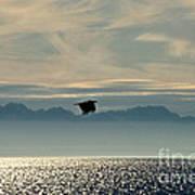 Alaskan Eagle At Sunset Art Print