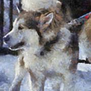 Alaskan Malamute Photo Art 09 Art Print