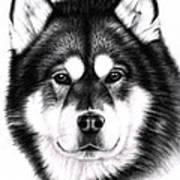 Alaskan Malamute Portrait Art Print