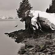 Alaskan Winter Coast Art Print